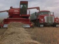 Harvest Time on the Prairies